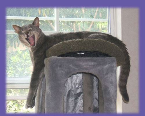 "Yawning kitty ""cat care"""